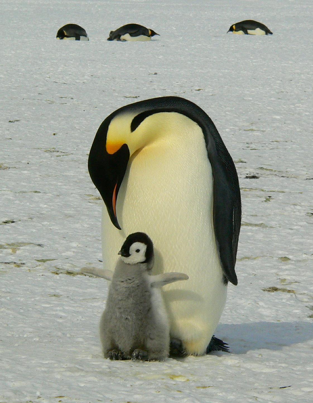 Pingo – die umweltfreundliche Windel